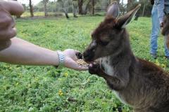 Kangaroo Island - 1