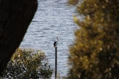 Kangaroo Island - 2